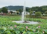 성주군 초전 용성 뒷미지…연꽃 보러 오세요!!!