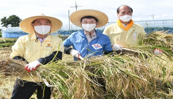 이철우 도지사, 추수 현장에서 농부들과 수확의 기쁨 나누어...