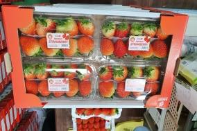 경북농업기술원, 겨울철 K-딸기 인기를 견인하다.