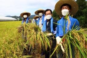 칠곡군, 2021년 첫 벼베기…수확의 기쁨도 먼저!!!